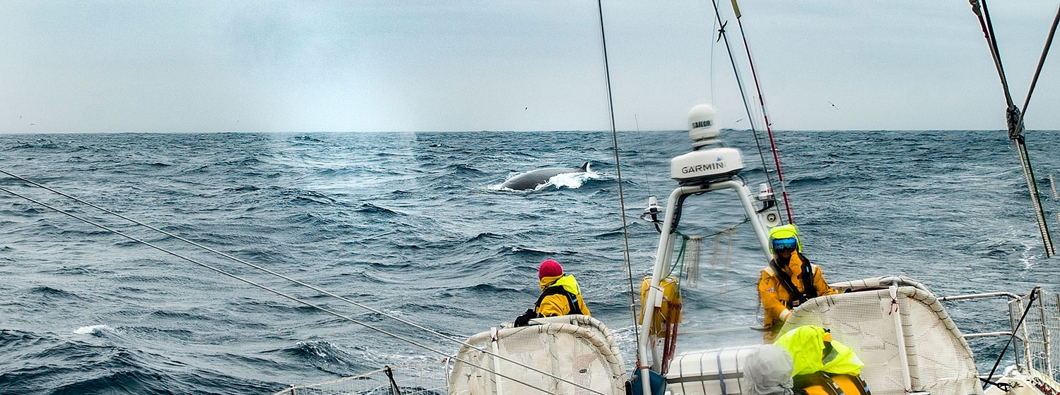 Whale sighting on board Zhuhai