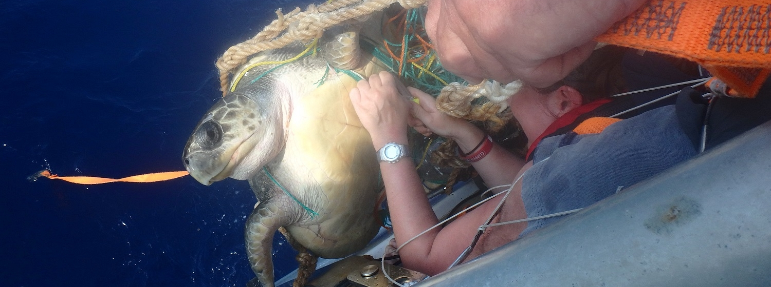 The PSP crew shown helping to free a turtle from plastic waste